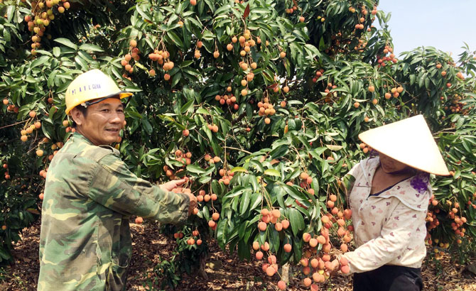 Tỷ phú,  xóm Lớ, Trần Quang Sơn, lập nghiệp, trang trại