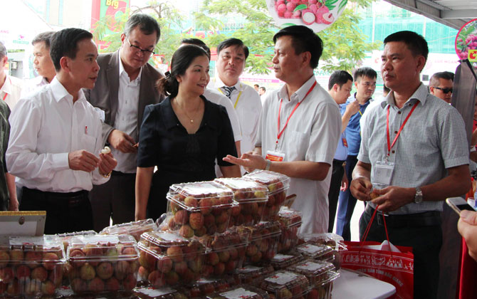 Finding new consumption markets for Bac Giang litchi