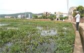 Ruộng đồng bỏ hoang vì nước thải