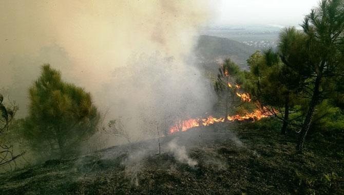 Thiệt hại gần 23 ha rừng do cháy