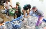 Bắc Giang: Doanh thu từ thủy sản đạt hơn 600 tỷ đồng