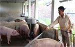 """Làm """"ấm"""" thị trường lợn thịt"""