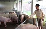 Làm 'ấm' thị trường lợn thịt