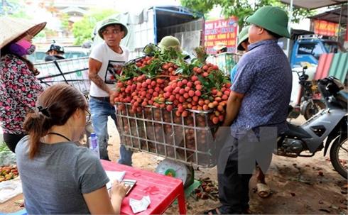 Vải thiều Bắc Giang được tiêu thụ mạnh nhờ chất lượng vượt trội