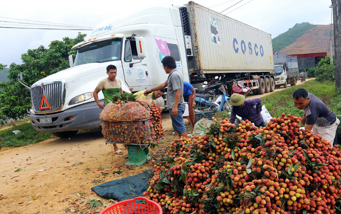 Tiêu thụ nông sản: Đột phá mới nhất từ Bộ Nông nghiệp và PTNT