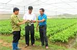 Chủ tịch UBND xã Quang Thịnh Hoàng Văn Trịnh sát cánh cùng nông dân