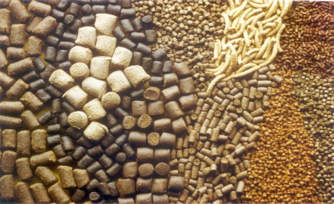 Xử phạt 6 doanh nghiệp vi phạm về sản xuất thức ăn chăn nuôi