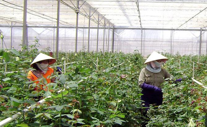 Doanh thu từ trang trại đạt hơn 800 tỷ đồng/năm