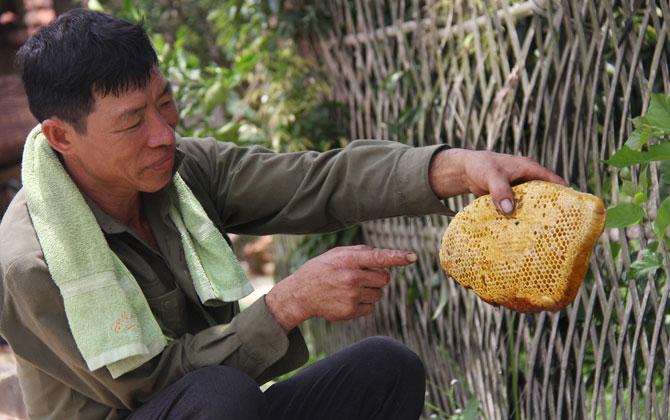 Săn, ong khoái, rừng, Tây Yên Tử