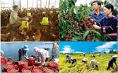 Hơn 306 nghìn tỷ đồng tái cơ cấu ngành trồng trọt, chăn nuôi theo hướng hiện đại