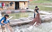 Làm giàu từ nuôi cá ở lòng hồ Cấm Sơn