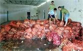 Lạng Giang: Tiêu hủy 12 tấn hành tây nhập lậu