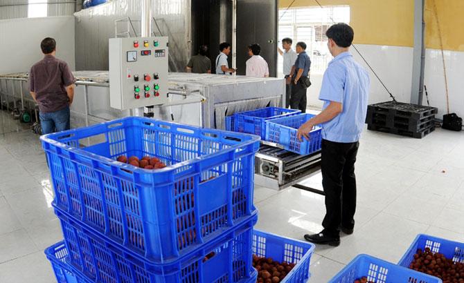 Vận hành dây chuyền bảo quản vải thiều xuất khẩu