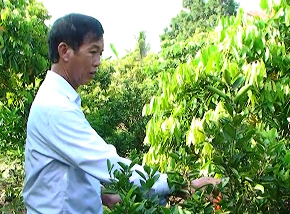 Cựu chiến binh, Trần Ngọc Phú, vượt lên, thương tật, làm giàu