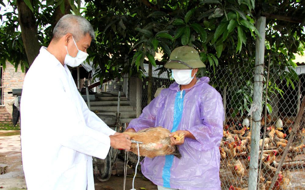 Cán bộ thú y xã Tiến Dũng (Yên Dũng) tiêm phòng cho đàn gà tại thôn Đông Thắng.