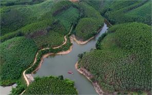 Rừng kinh tế ở Đông Sơn (Yên Thế)