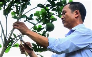 Thương binh Nguyễn Văn Thiết: Vượt khó, gương mẫu