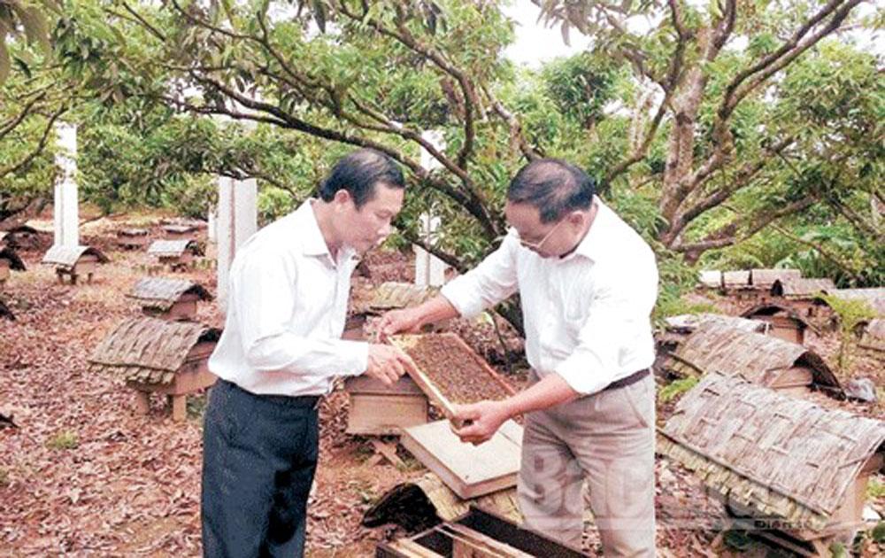 Cần cơ chế hỗ trợ xây dựng thương hiệu mật ong rừng Sơn Động