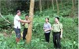 Giải quyết tranh chấp, lấn chiếm đất rừng: Chậm trễ do đâu?
