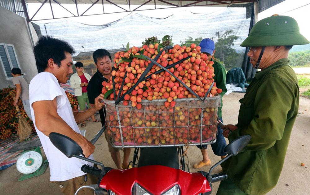 Sản xuất nông nghiệp theo tiêu chuẩn: Nâng cao chất lượng, giá trị nông sản