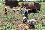 Làm giàu trên quê mới Tây Ninh