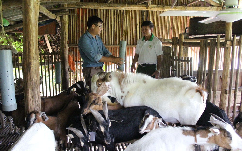 High income earned from goat farming