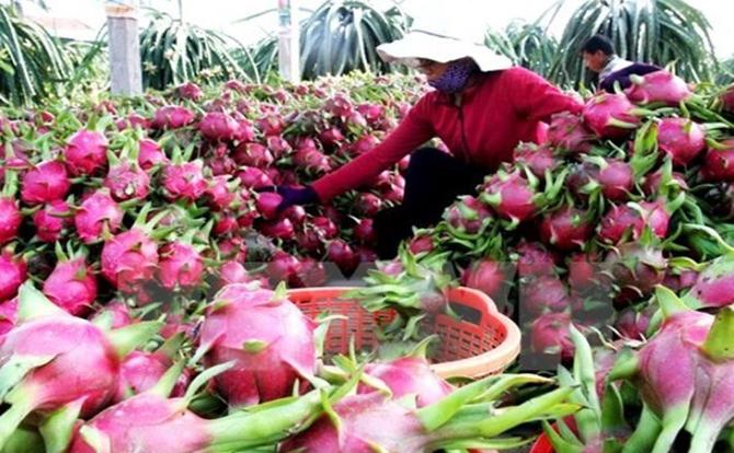 Xuất khẩu rau quả vượt mức trên 2 tỷ USD trong 7 tháng
