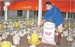 Chăn nuôi gia công - Còn coi nhẹ môi trường