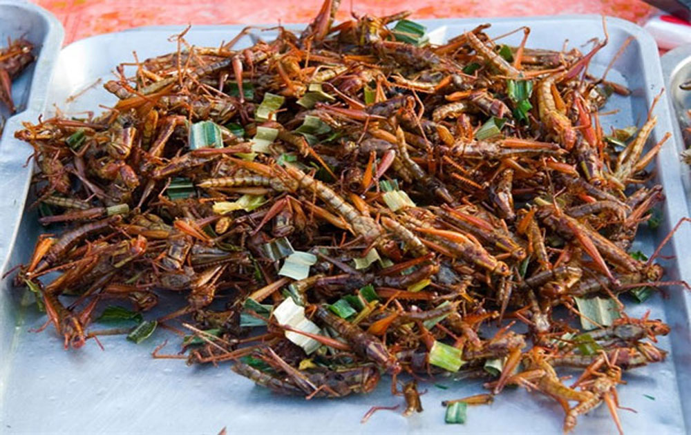 Insects a delicacy for Vietnamese foodies