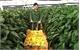 23 sinh viên nông nghiệp ưu tú sang Isarel thực tập
