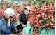 Farm produce exports – a highlight of the economy