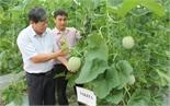 Sản phẩm Nông nghiệp ứng dụng công nghệ cao: Cung không đủ cầu
