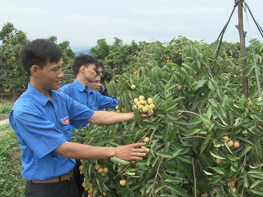 thanh niên nghèo; phát triển kinh tế; huyện đoàn Lục Ngạn, hỗ trợ