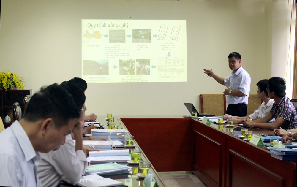 Xây dựng thành công mô hình trồng nghệ theo hướng GACP