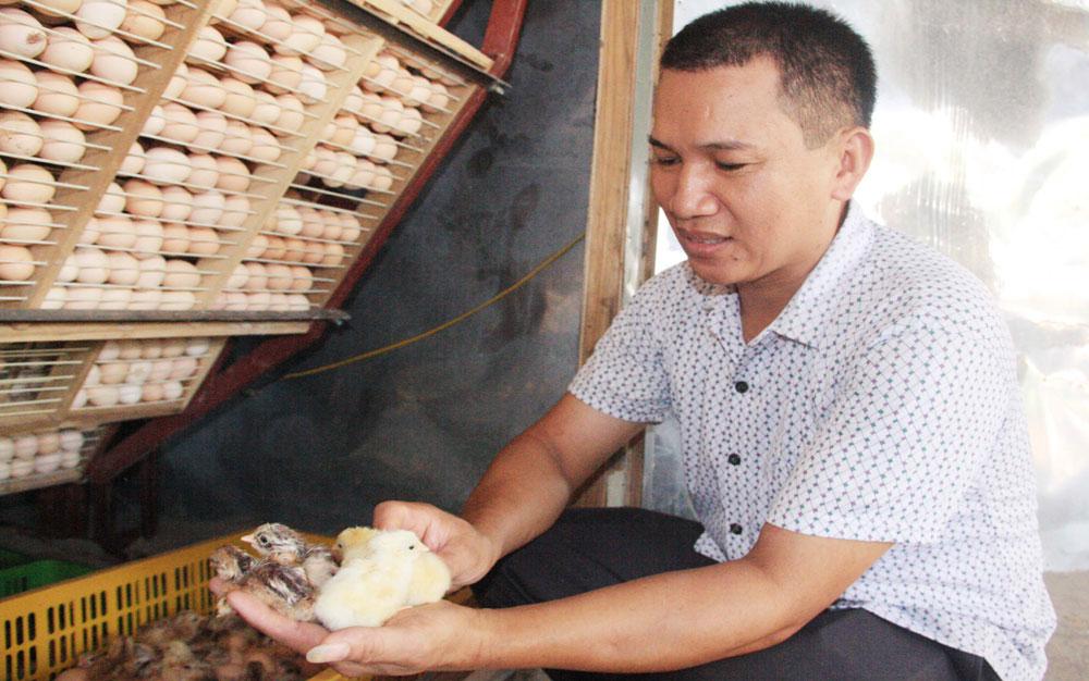 Phong trào thi đua sản xuất kinh doanh giỏi: Nông dân hợp tác làm giàu