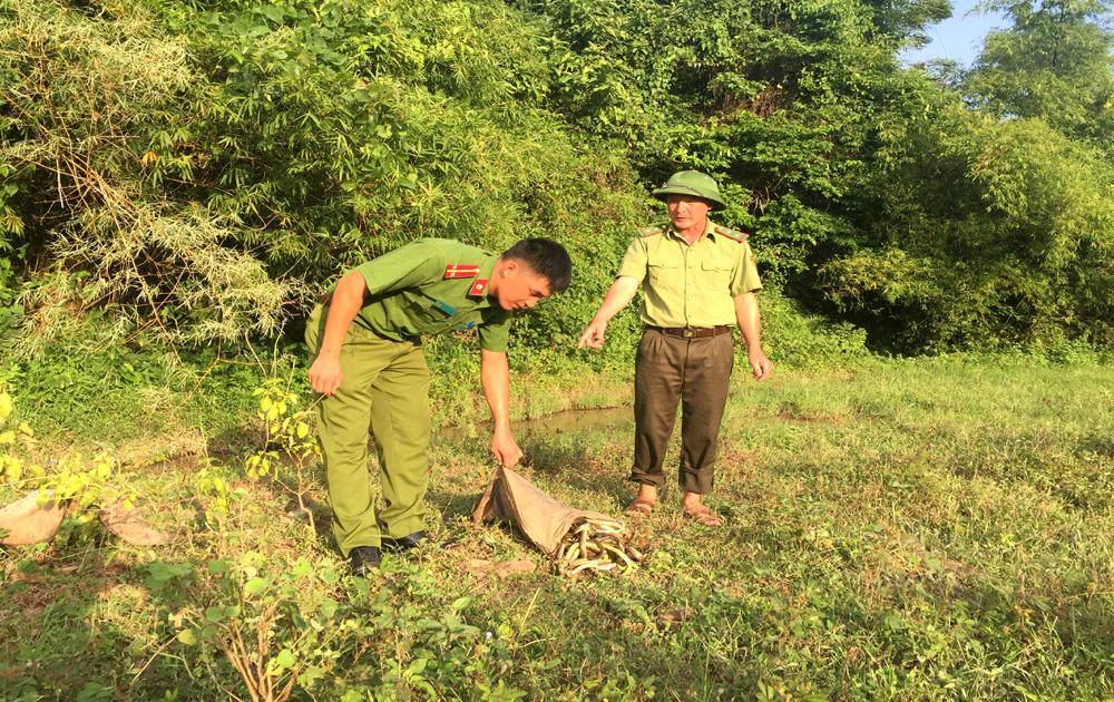 Lục Ngạn thả 28 kg rắn về rừng tự nhiên