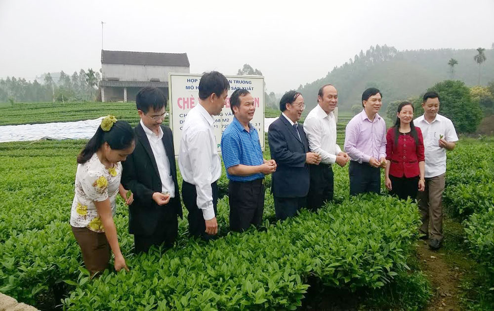 Project carried out to develop community-based tourism in Xuan Luong