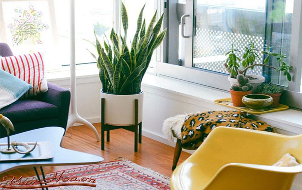Các cây hút khí độc nên trồng trong nhà