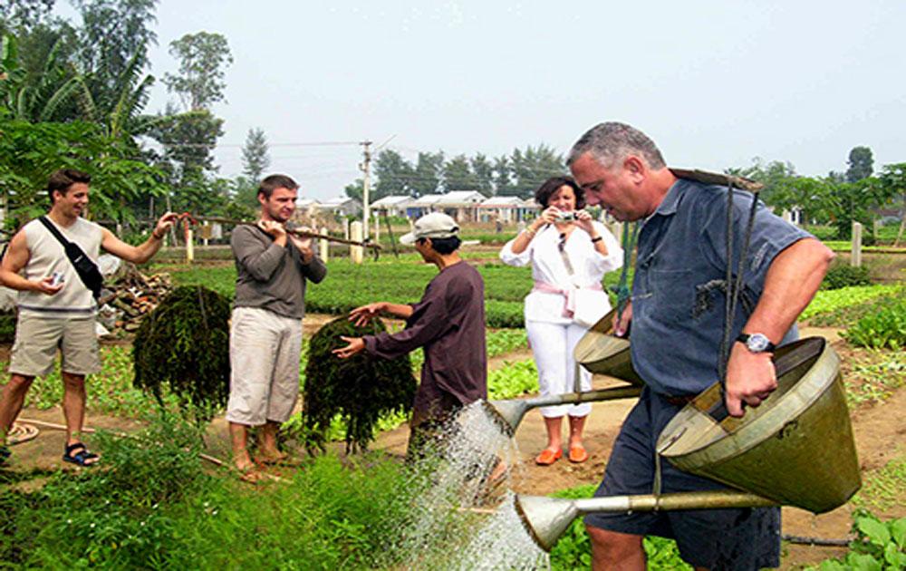 Từ vườn rau đến tiềm năng du lịch nông nghiệp