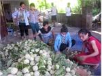 Lục Nam: Giá na đạt 30 nghìn đồng/kg, nhiều hộ thu về hàng trăm triệu đồng