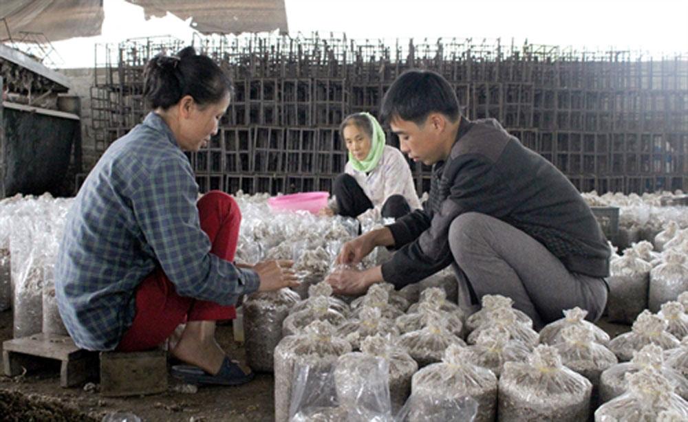 Đổi đời từ trồng nấm