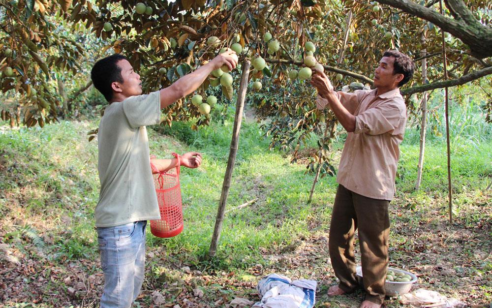 Tân Yên: Xây dựng nông thôn mới gắn với chuyển dịch cơ cấu kinh tế nông nghiệp