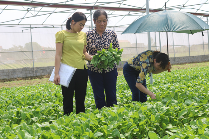 Lục Nam: Tỷ lệ đảng viên nữ chiếm trên 25%