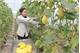 Vẫn khó tiếp cận gói tín dụng nông nghiệp công nghệ cao