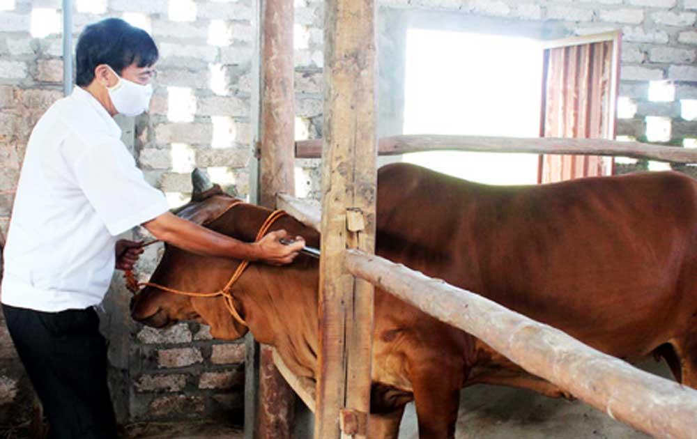 Sơn Động, Một số gia súc,  chết do bệnh, tụ huyết trùng