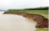 Sạt lở hơn 50 m bãi sông đê tả Cầu