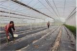 Tích tụ ruộng đất, tăng hiệu quả canh tác: Kỳ 1 - Ruộng rộng, lợi nhuận lớn