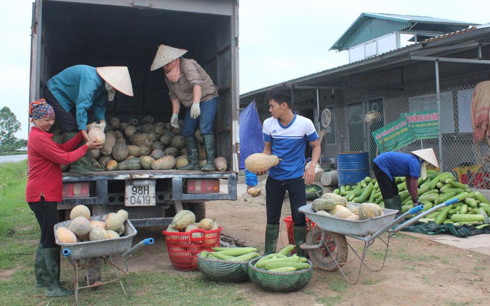 Doanh nghiệp thu mua sản phẩm của HTX Rau sạch Yên Dũng.