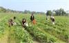 Tích tụ ruộng đất, tăng hiệu quả canh tác: Kỳ 2 - Xóa những rào cản