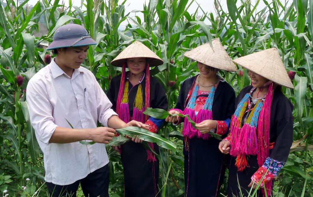 Dự án 600, Bắc Giang, ba đội viên, trí thức trẻ, được tuyên dương